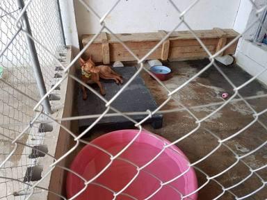Un perro abandonado en la calle es rescatado y acaba en el lugar más inesperado