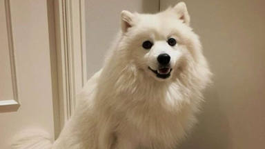Un perro es llavado al veterinario porque no ladra y las pruebas de ADN hacen saltar las alarmas
