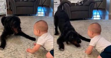 Una madre graba a su bebé con su perro y el resultado emociona a millones de personas
