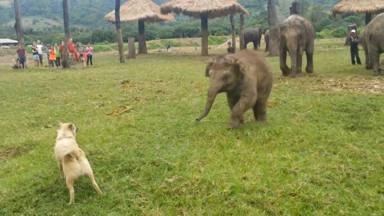 Un perro se cruza con un bebé elefante y ocurre algo totalmente inesperado