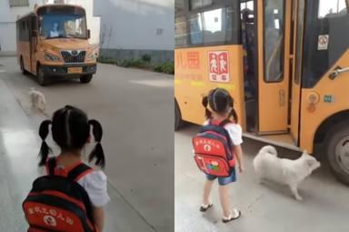 Un perro espera cada día en la parada del autobús y el verdadero motivo emociona a todos
