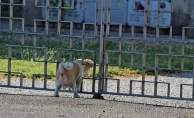 Fallece el dueño de un perrito y su gesto de lealtad deja a todos los vecinos sin palabras