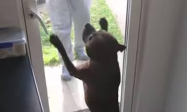 """Un perro se reencuentra con su """"abuelo"""" tras el confinamiento y su reacción conmueve a todo el mundo"""