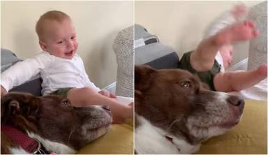 Un bebé se parte de risa al jugar con su perro y de pronto todo da un giro dramático