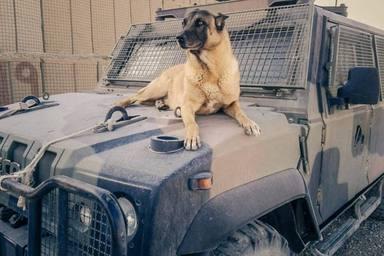 Un perro salva a un militar y su reacción al volver a verse deja a todos sin palabras