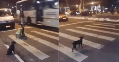 Un perro da una auténtica lección de civismo y deja a varios testigos sin palabras