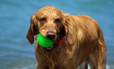 Las claves básicas para que tu perro no huela mal cuando se moja