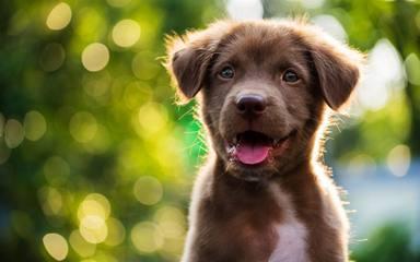 Una perrita se derrumba tras la muerte de su cachorro y su reacción rompe el corazón de todos